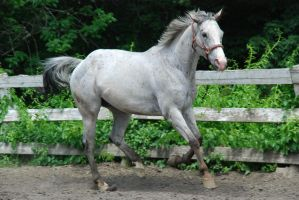 Appaloosa 95 by Spotstock