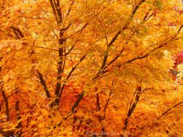 Leaves Of Fall by jim88bro