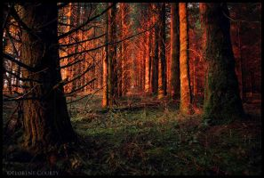 The End by FlorentCourty