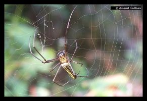 Spider Macro 04 by Knightmare-at-9
