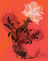 The Flower Experiment by jpf2007