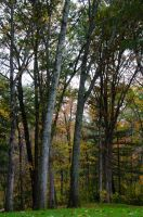 White Mountains  Fall Foliage  083 by FairieGoodMother