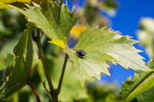 Fly on a leaf by TLO-Photography