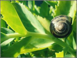 Snails are our friends by angela-swift