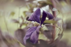 Purple Flower by delivess