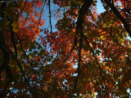 Under the Maple Tree by thenonhacker