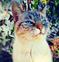 Almost Angry Cat by O-Tripp