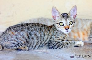 baby cat by shispis