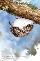Brown Creeper by Nambroth