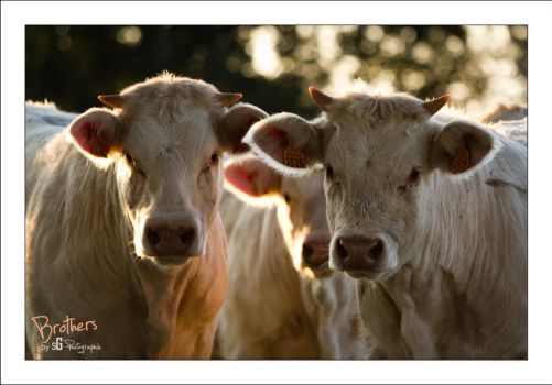 Brothers by sG-Photographie