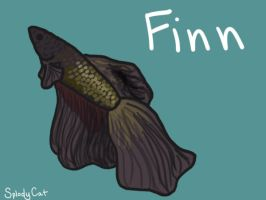 Betta Fish: Finn by myexplodingcat