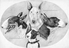 Bullterriers by 22Zitty22