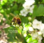 Bee by 91Elena91