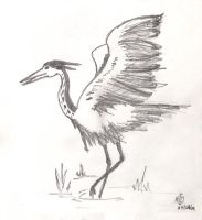 Heron by adragor