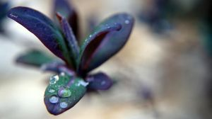 dew drops by HAYNSRT