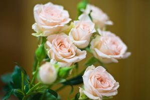 Just Some Roses by Sulde