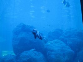 346 Tarpon Aquarium by crazygardener