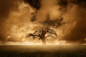Our Tree by AlexHawkPhotography