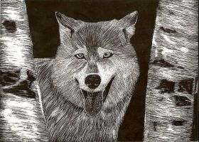 Wolf scratch board Finished by shirou45