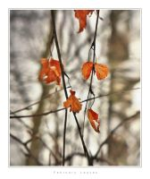 February Leaves by Pajunen