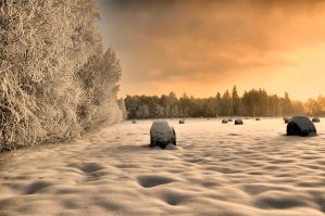 This is Winter by tomsumartin