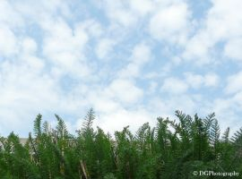 grow high untill the blue blue sky by animelover145