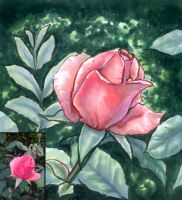 Rose study 1 -markers- by MidoriGale