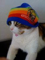 Rainbow Hip Cat by Asher-Bee