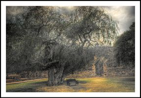 the tree and the bench by sanwahi