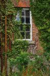 The Window That Time Forgot by Forestina-Fotos