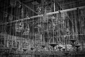 chains and cages by schnotte