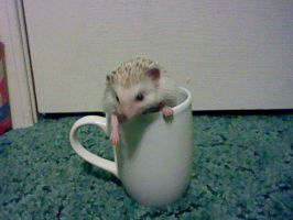 Hedgehog Mug: Take Four by BlackDog624