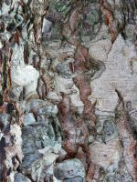 Bark II by IdunaHaya-Stock