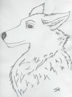SETH CLEARWATER- Wolf by SillyCuba
