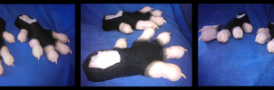 Opossum Footpaws by CuriousCreatures