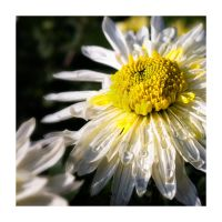 life is a flower 05 by madazulu