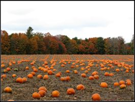 The Pumpkin Patch by Michies-Photographyy