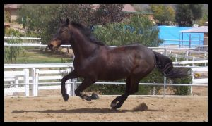 Bred To Win by GirlOnPaintHorse