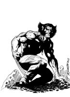 Wolverine Black white by D-ComicsStudio