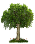 PNG TREE 8 by Moonglowlilly