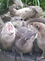 Otters... by M-Knowler