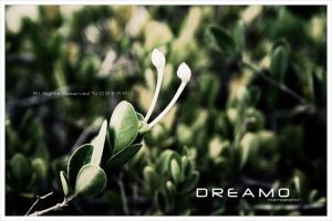 Nature1 by D-R-E-A-M-O
