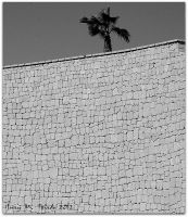 Lone palm by quevedo3