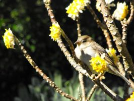 Sparrow in tree by Obey-the-soapbubble