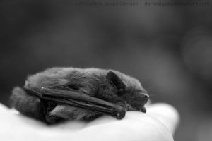 Bat Resting On A Cloud by darkcalypso