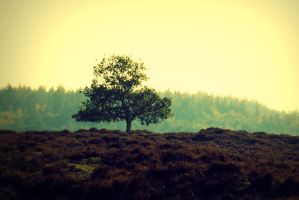 tree in the middle by saranne16
