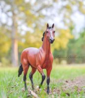 Afleet Alex by BamaBelle2012