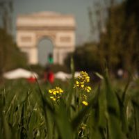 Nature Capitale X by Masterciel