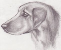Dog Sketch by LyonsGate