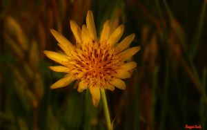 The wild flower.  Macro photo.2011. by magyarilaszlo